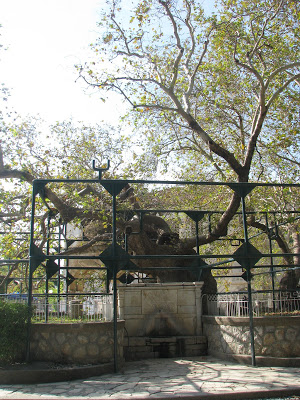 The spring next the plane tree of Hippocrates