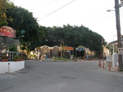 platani1