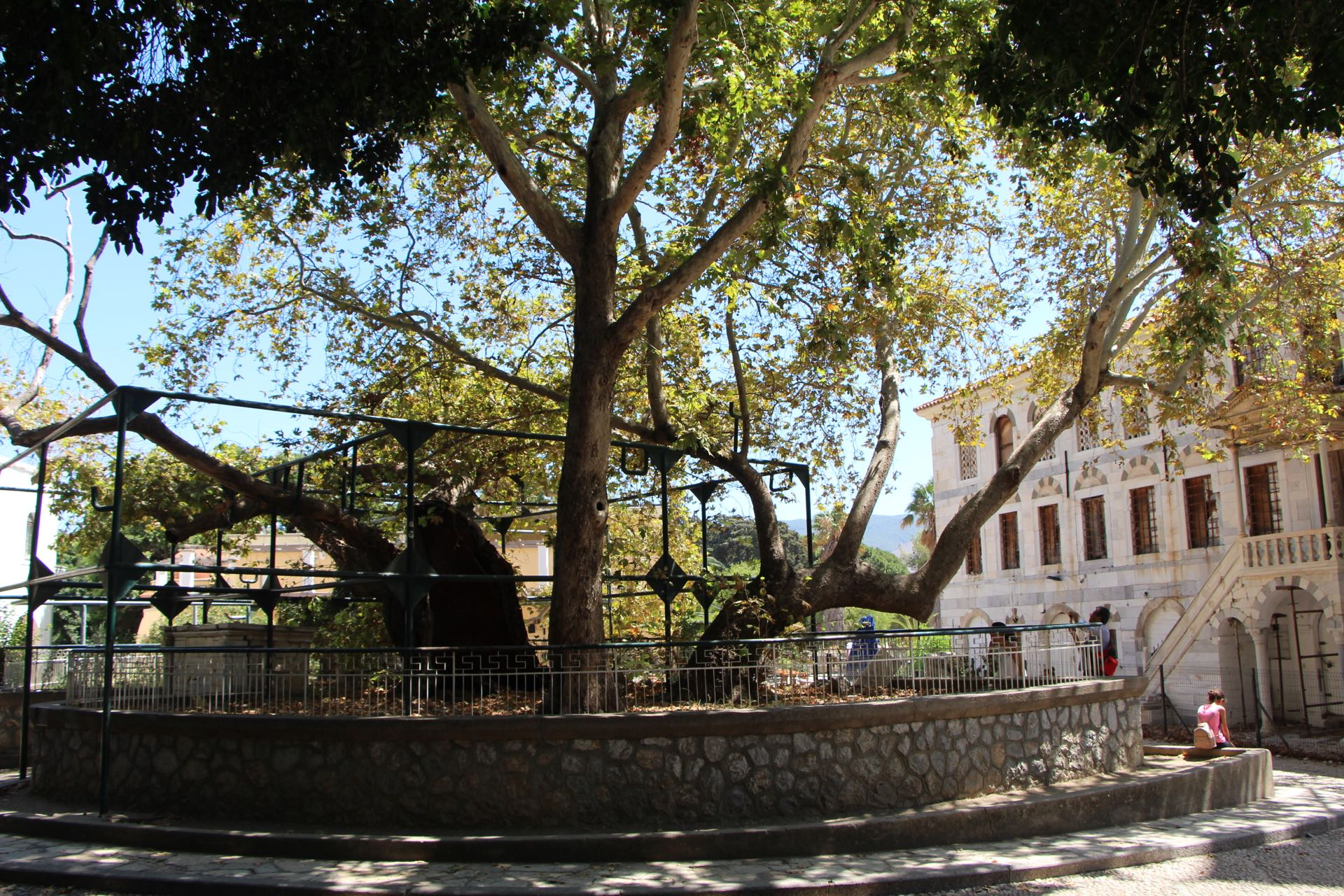 The plane tree of Hippocrates in Lotzia square